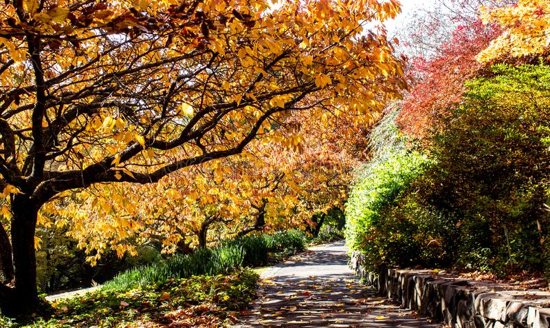 Jesień spadku złoci liście w pomarańcze, kolorze żółtym i czerwieni w ogrodowym położeniu z wijącym droga przemian, obrazy stock