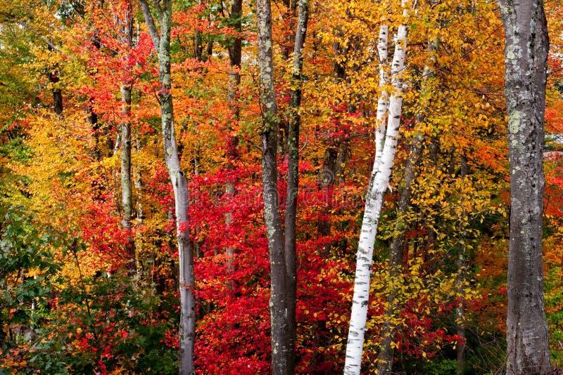 jesień spektakularny obrazy stock