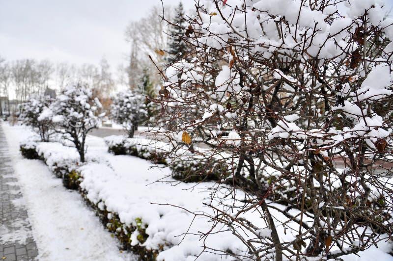 jesień spotyka zima E fotografia stock