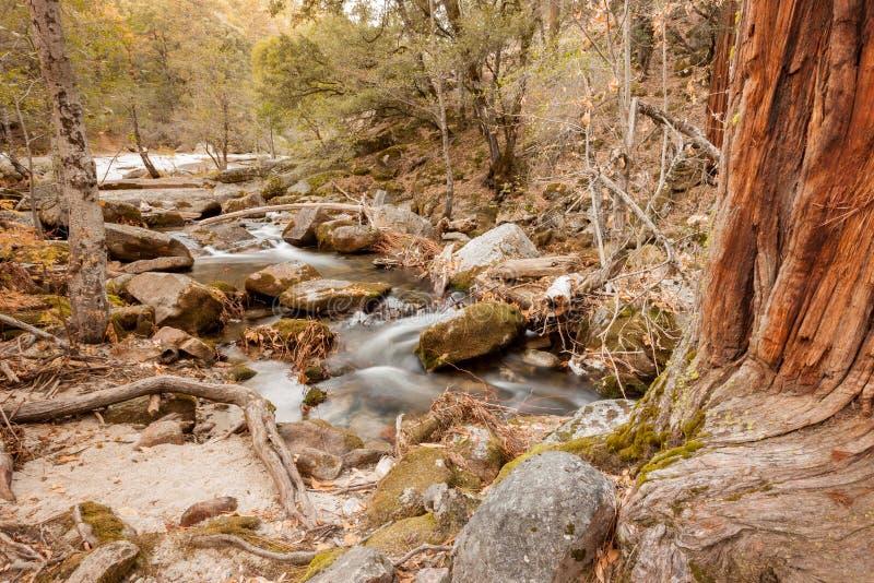 Jesień strumień w lesie zdjęcie royalty free