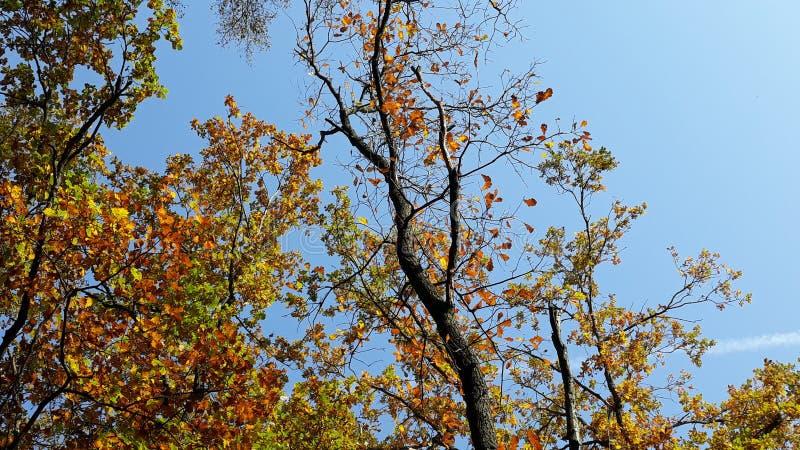 jesień tła błękit opuszczać niebo zdjęcie royalty free