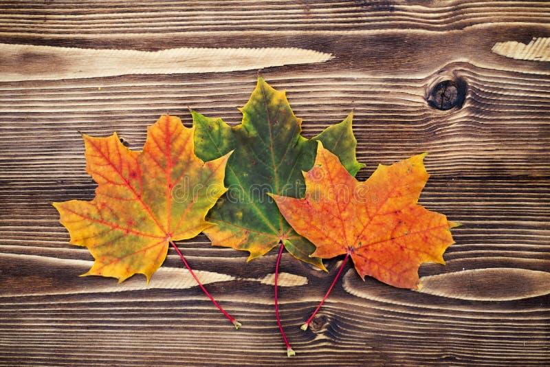 8 jesień tła deska barwiąca eps kartoteka zawierać opuszczać drewniany zdjęcia royalty free