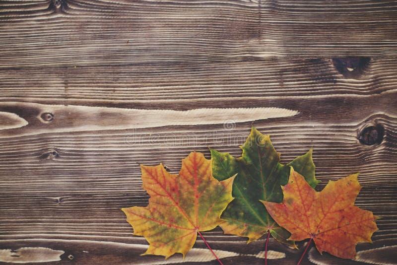 8 jesień tła deska barwiąca eps kartoteka zawierać opuszczać drewniany obraz stock