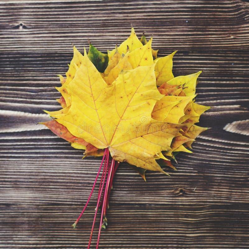 8 jesień tła deska barwiąca eps kartoteka zawierać opuszczać drewniany fotografia stock
