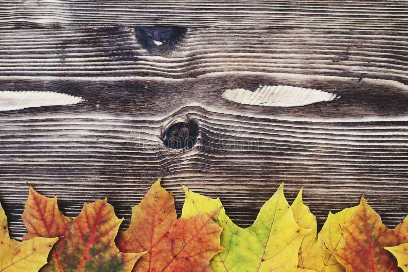 8 jesień tła deska barwiąca eps kartoteka zawierać opuszczać drewniany obraz royalty free