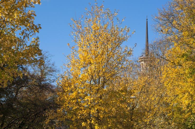 jesień tła kolorowi susi liść obrazy royalty free
