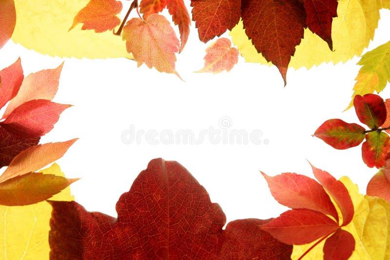 jesień tła koloru liść wciąż pracowniany biel fotografia stock