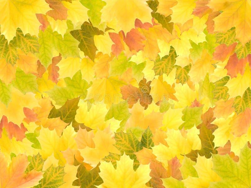 jesień tło opuszczać klonu obrazy royalty free