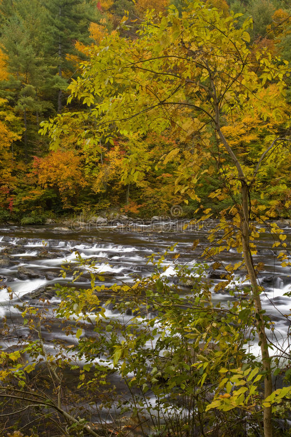 jesień tellico nf rzeki tellico obraz stock