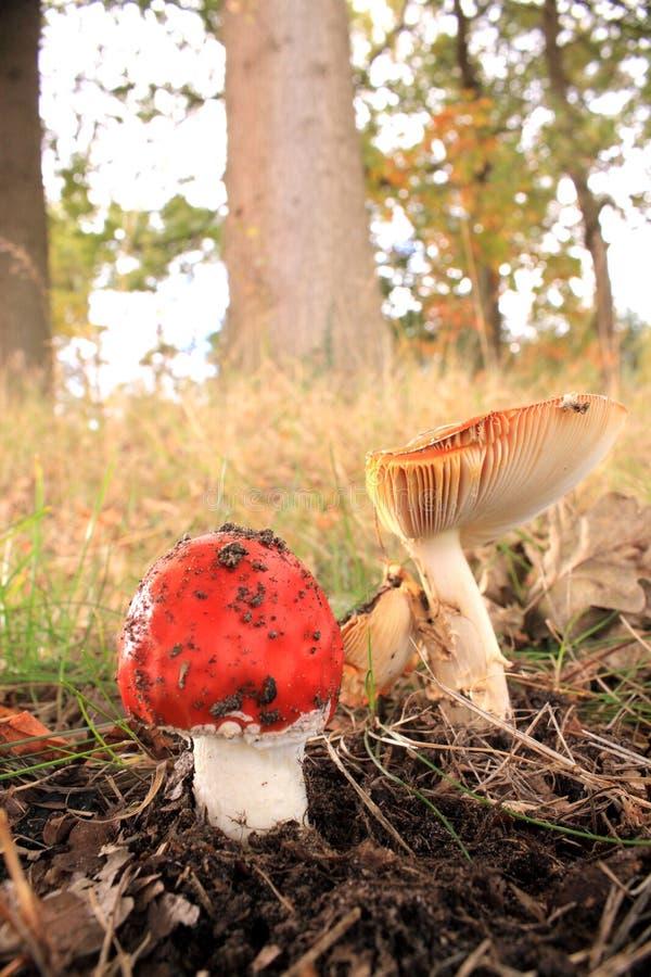 jesień tutaj fotografia stock