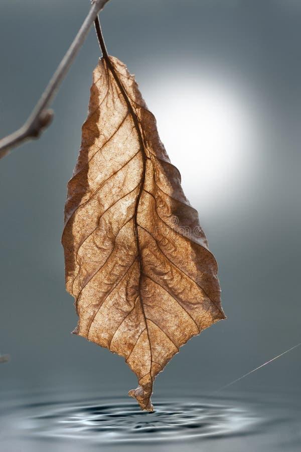 jesień tylny liść światło fotografia stock
