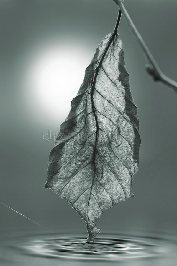 jesień tylny liść światło obrazy stock