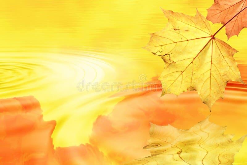jesień tylny liść światło obraz stock