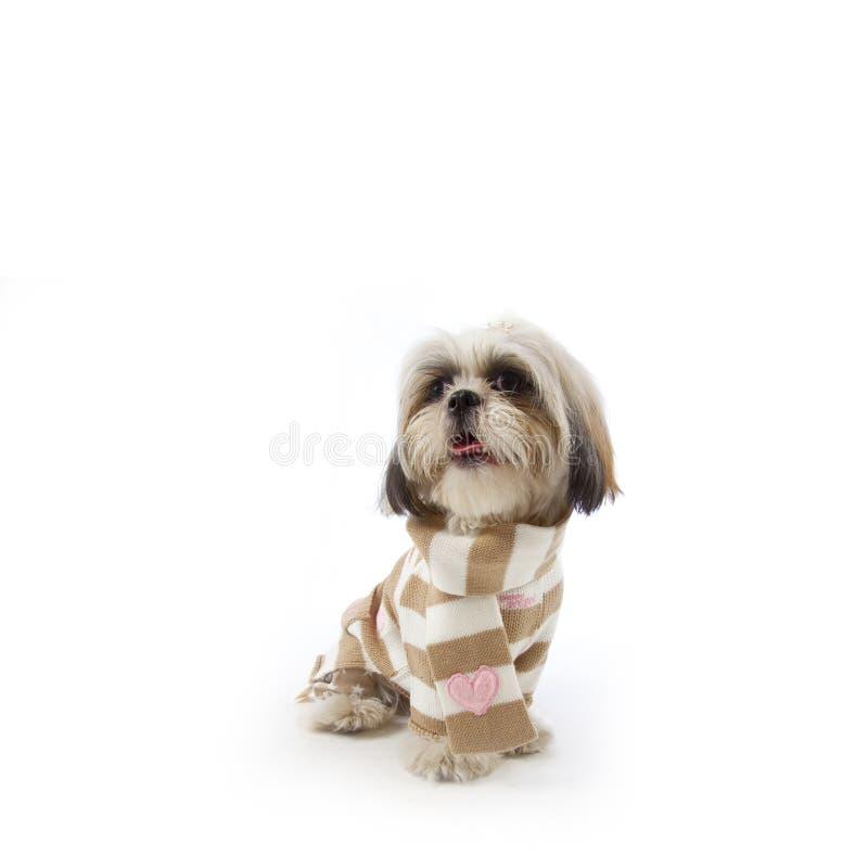 jesień ubrań pies zdjęcie stock