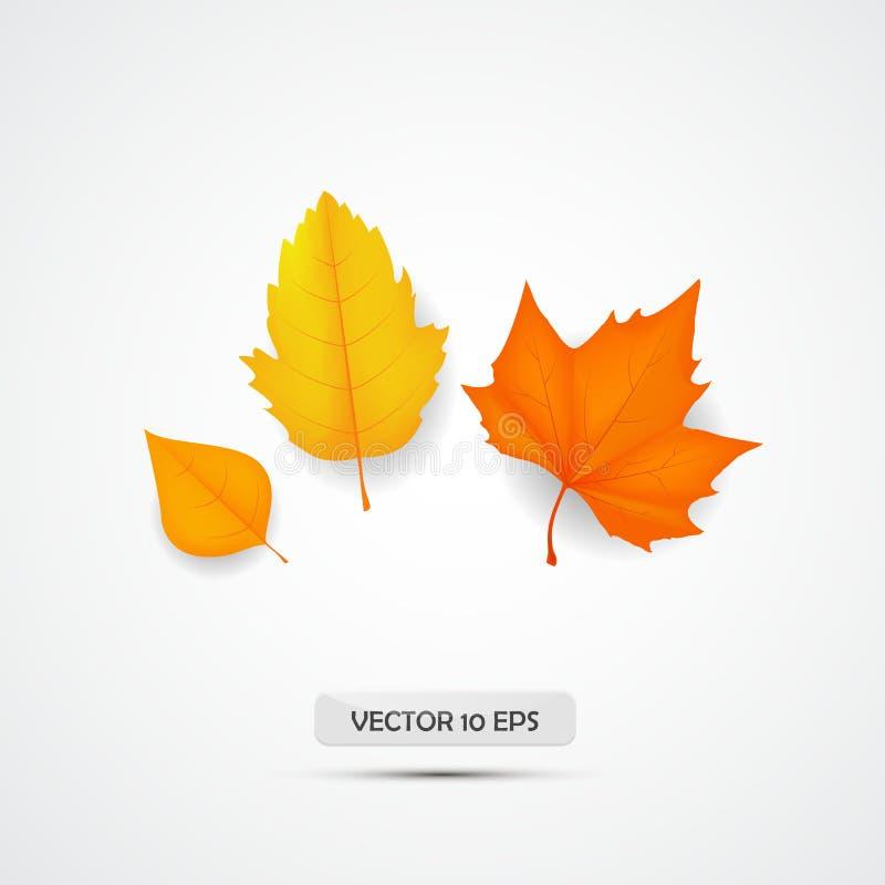 Jesień urlop Jesienny ulistnienie odizolowywający Pomarańczowy liścia klon wektor ilustracji