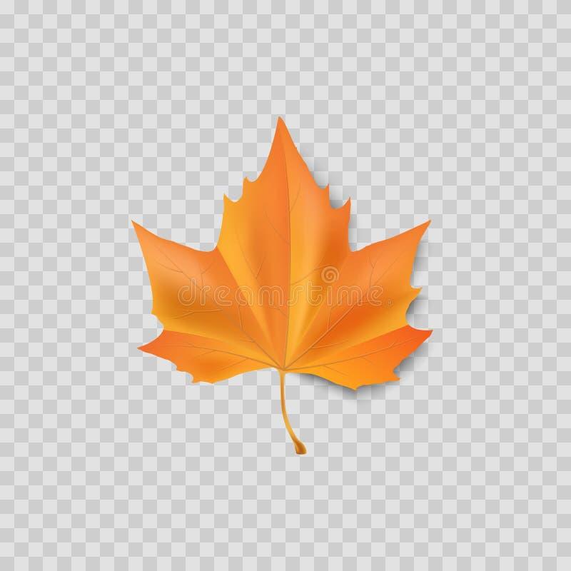 Jesień urlop Jesienny ulistnienie odizolowywający Pomarańczowy liścia klon wektor royalty ilustracja