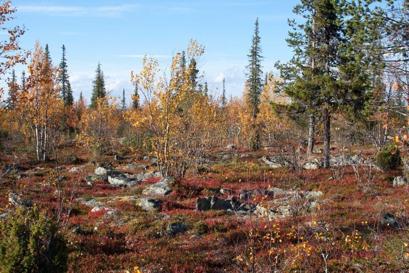 Jesień w Głębokim tajga lesie, Finlandia obrazy royalty free