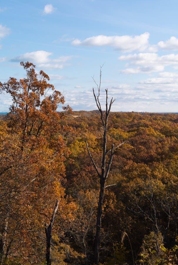 Jesień w Indiana diun stanu parku zdjęcia royalty free