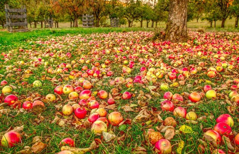 Jesień w jabłczanym ogródzie zdjęcia stock