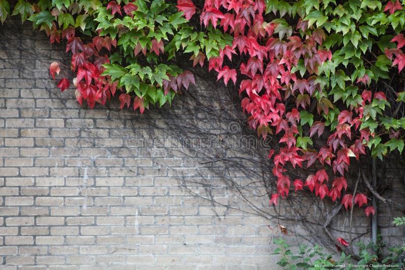 Jesień w kolorze obrazy stock