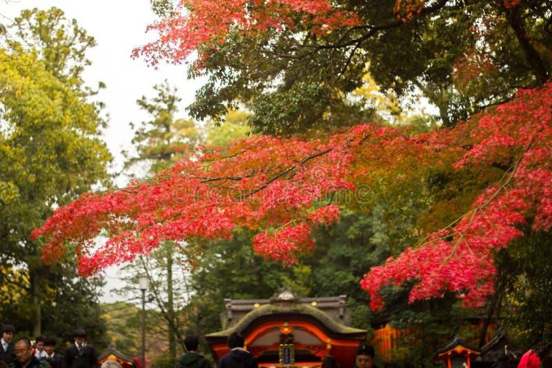 Jesień w Kyoto, Japonia zdjęcie royalty free
