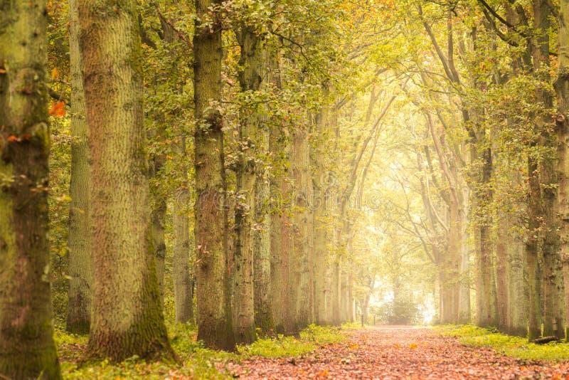 Jesień w lesie obrazy stock