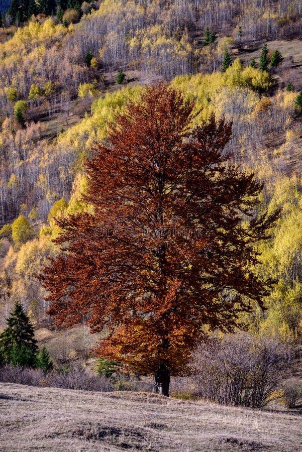Jesień w naturze obraz royalty free