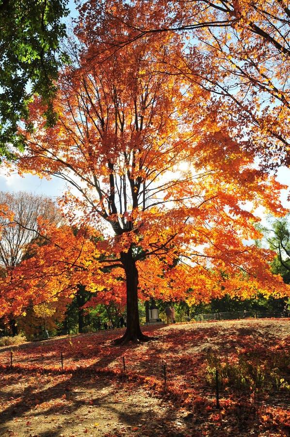 Jesień w Nowy Jork obraz royalty free