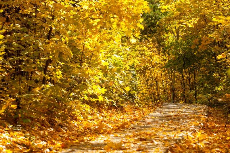 Jesień w parku zdjęcia royalty free