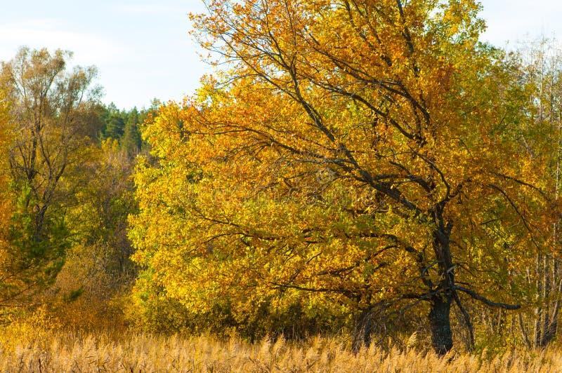 Jesień w parku obraz stock