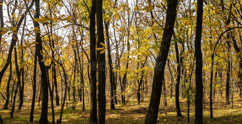 Jesień w parku, drzewa obraz royalty free