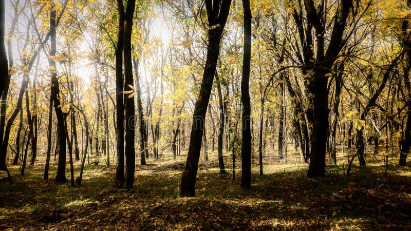 Jesień w parku, drzewa zdjęcia royalty free