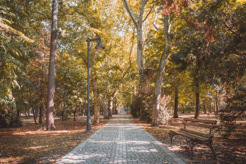 Jesień w parku, piękny jesień krajobraz obraz stock