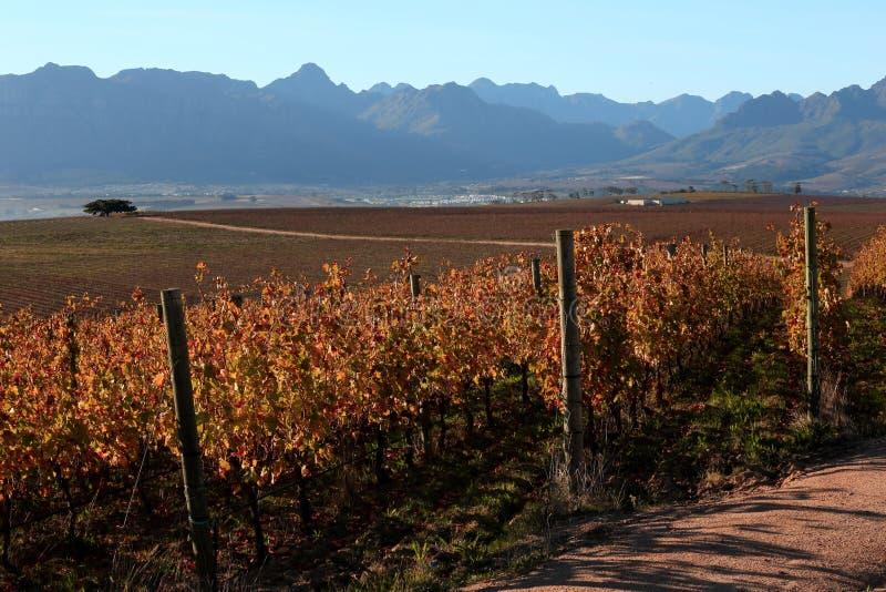 Jesień w Południowa Afryka. obrazy royalty free
