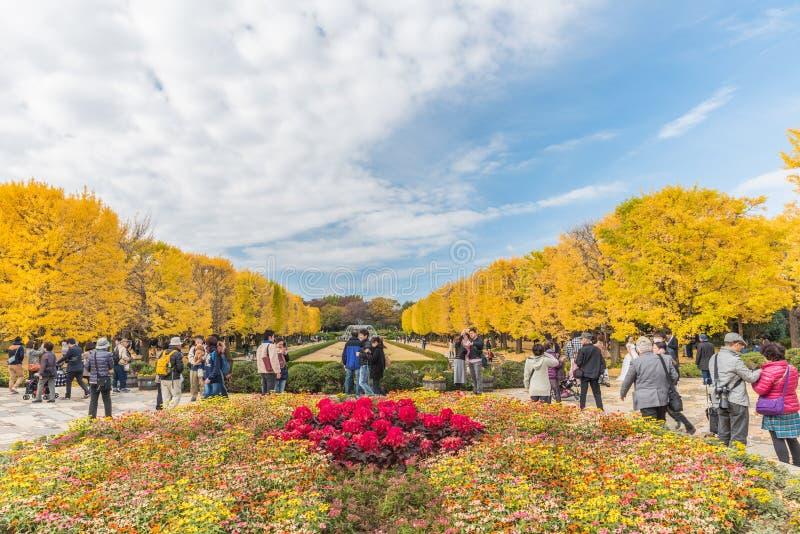 Jesień w Showa pamiątkowym parku, Tachikawa, Japonia zdjęcie stock