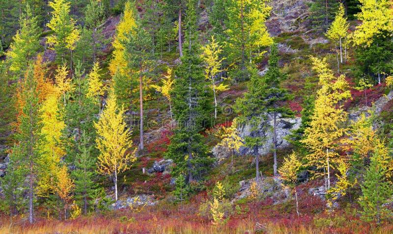 Jesień w skalistych górach w Północnym Finlandia obraz royalty free