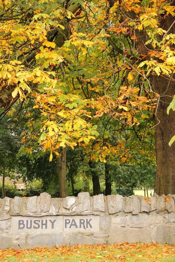 Jesień w Sumiastym Parku. Dublin. Irlandia obrazy stock