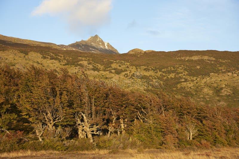 Jesień w Torres Del Paine parku narodowym, Chile obraz stock