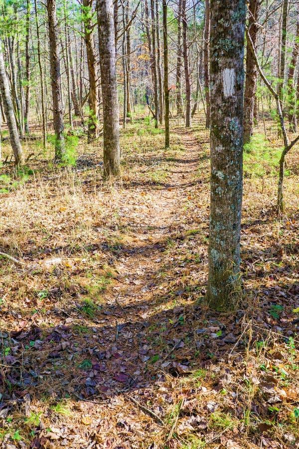 Jesień widok Appalachian ślad obrazy royalty free