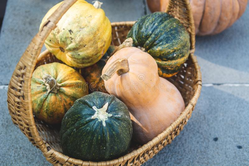 Jesień wieśniaka wciąż życie - różne colourful banie w koszykowej, selekcyjnej ostrości, fotografia royalty free