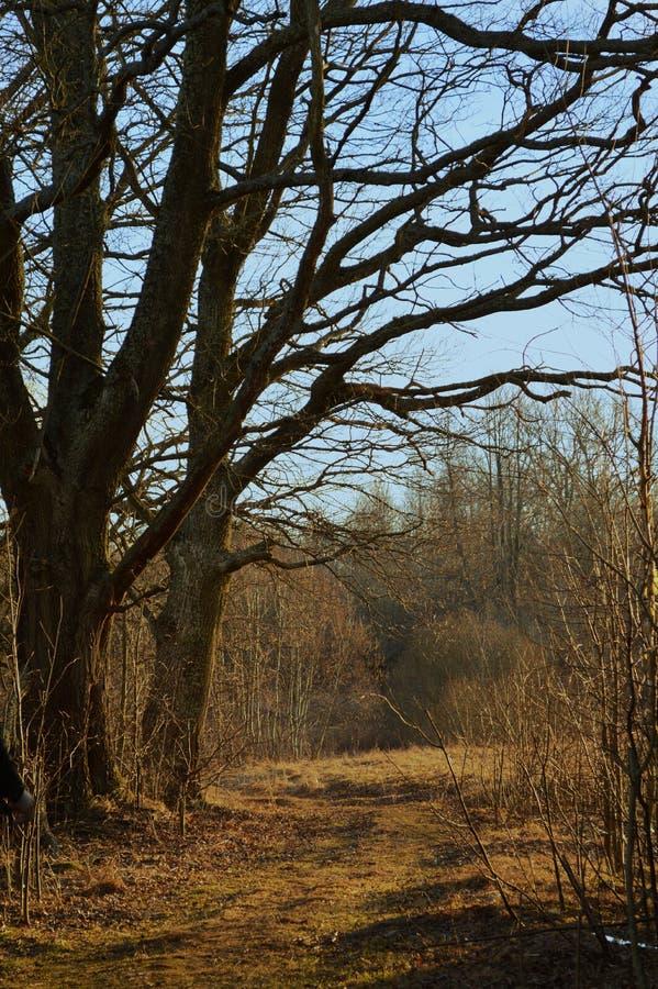 Jesień wiejski widok droga i drzewo obrazy royalty free