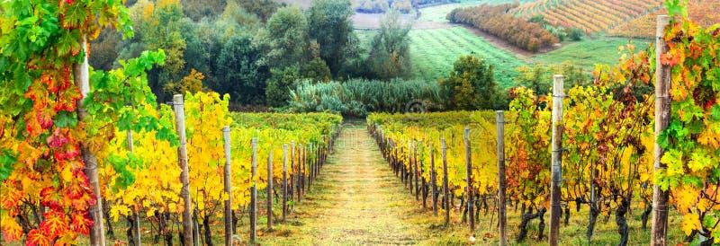 Jesień winniców krajobraz italy Tuscany obrazy royalty free