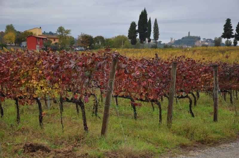 Jesień winnicy San Miniato Tuscany Włochy fotografia stock