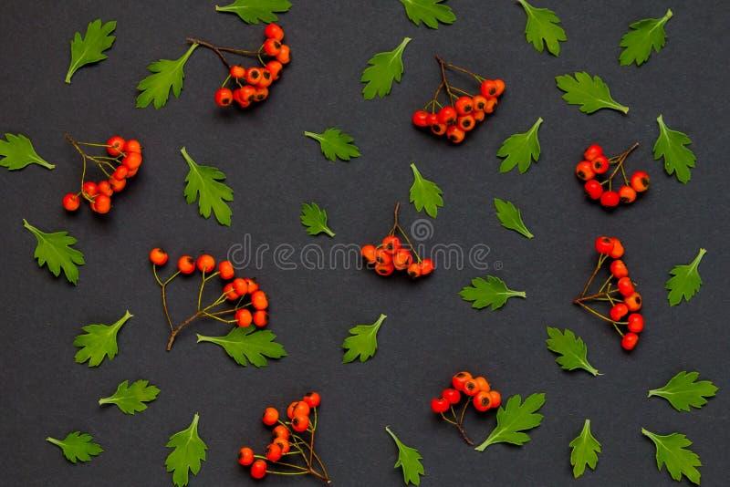 Jesień wzór z liśćmi i ashberry na czarnym tle ilustracja wektor