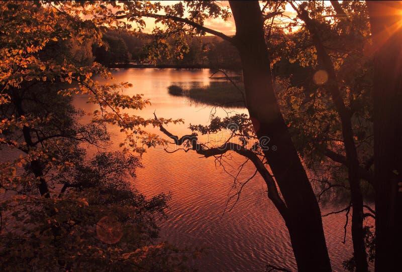 jesień złoto fotografia stock