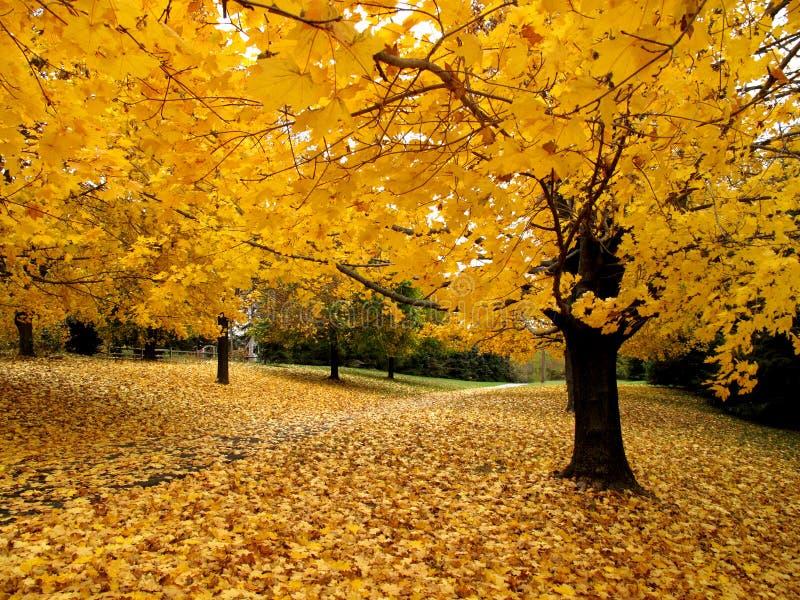 jesień złoto Listopad obraz royalty free