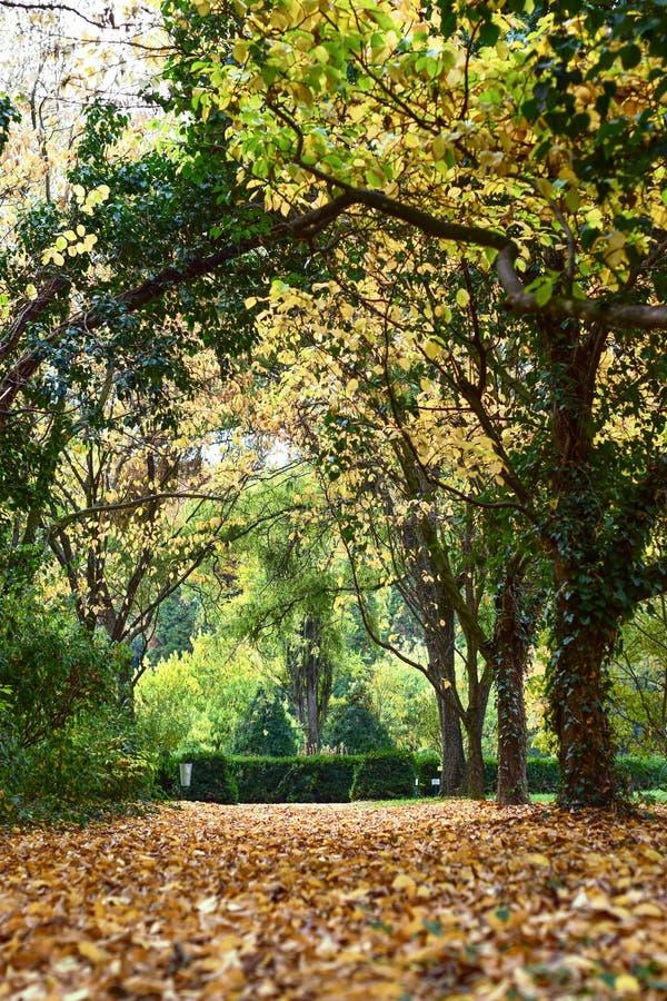 Jesień z kolorowymi liśćmi przy ogródem botanicznym zdjęcia royalty free