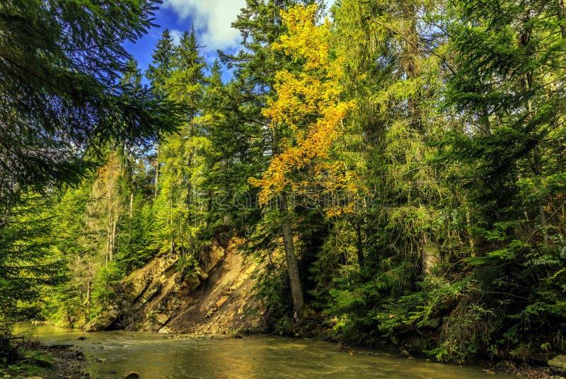 Jesień zadziwiający krajobraz kolorowi drzewa nad halną rzeką zdjęcia royalty free