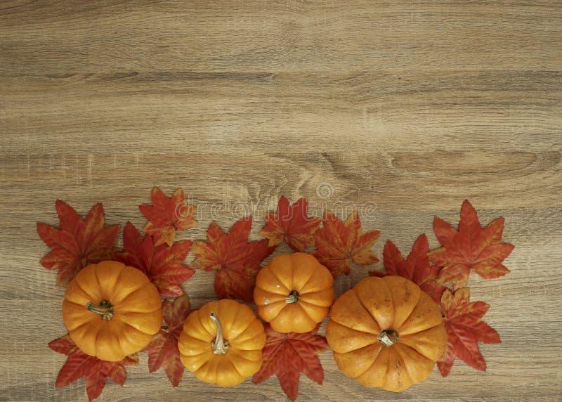 Jesień Zbierająca bania na drewnianym fotografia royalty free