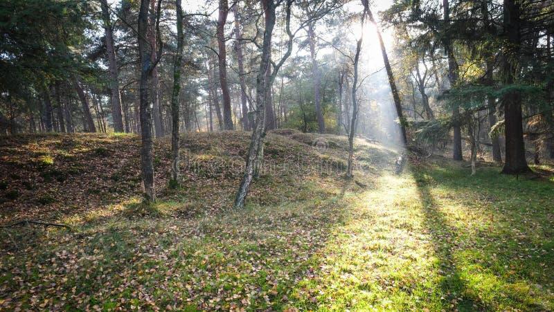 Jesień zmierzch w Mglistym lesie fotografia royalty free